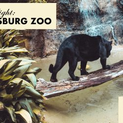 The Hattiesburg Zoo