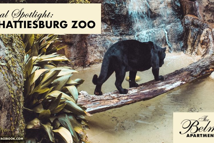 Local Spotlight: The Hattiesburg Zoo