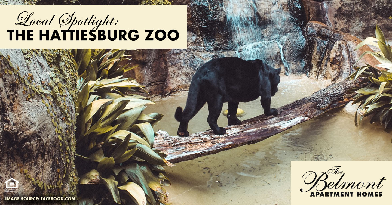 Local Spotlight: The Hattiesburg Zoo