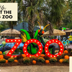 Zoo Boo at The Hattiesburg Zoo
